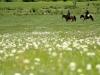 Mongolia Grasslands