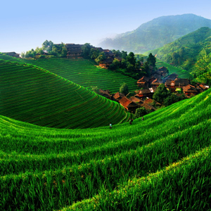 Longsheng China, emerald green rice terrace
