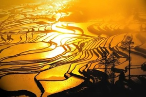 Rice Terrace at sunset