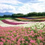 Japan-Hokkaido-Landscape-JF112_350A